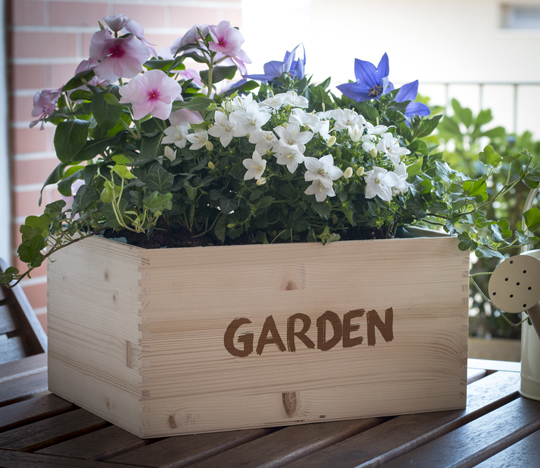casette in legno per piante