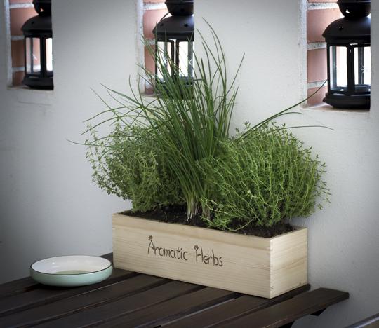 cassette in legno per piante